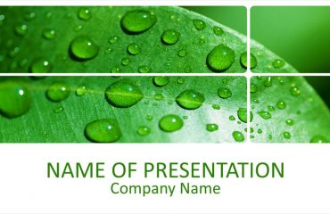 Leaf With Water Drops PowerPoint Template