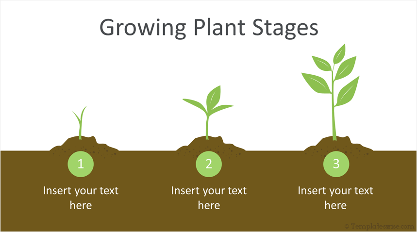 growing plant infographic powerpoint template